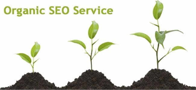 How Organic SEO Services Can Boost Your Traffic? - W3Era